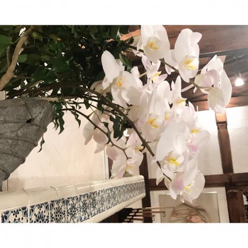 今度のお花♡ 代官山 恵比寿 美容室