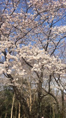 春は気分を変えてっ♪