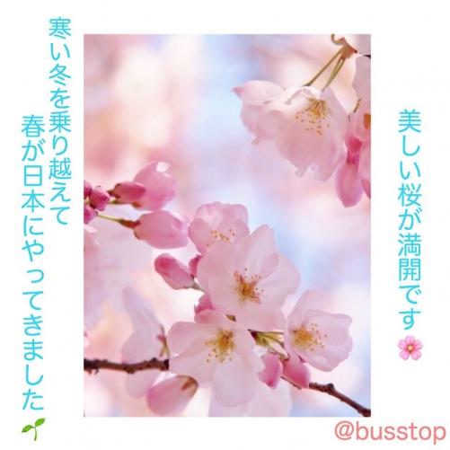 春が日本にやってきました!