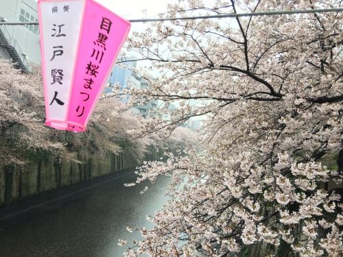 調布市国領の野川夜桜ライトアップ情報美容院