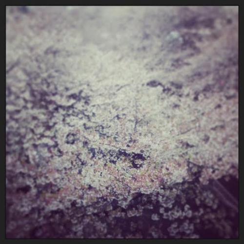 ★桜の季節も。。。(*´з`)