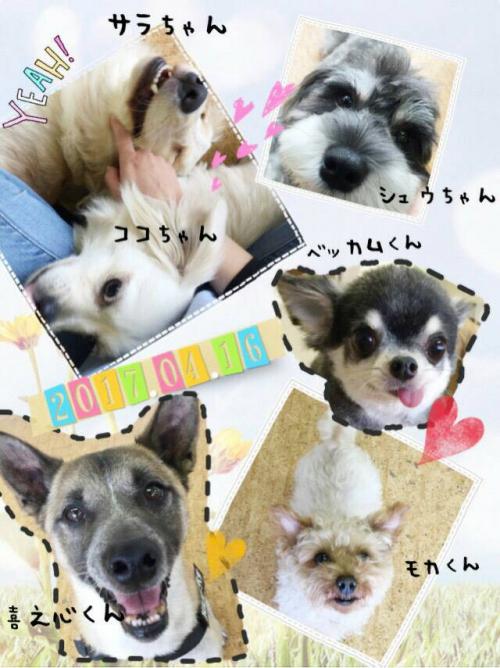 バリの犬事情から日本を見てみる