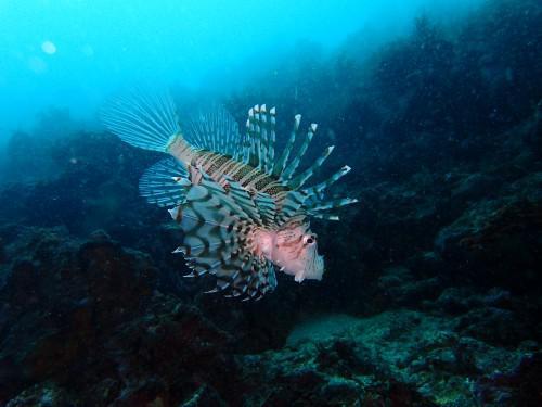 毒を持つ魚は美しい⁈