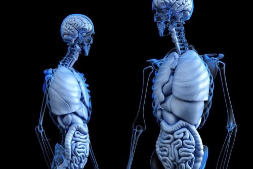 腸マッサージのメリット