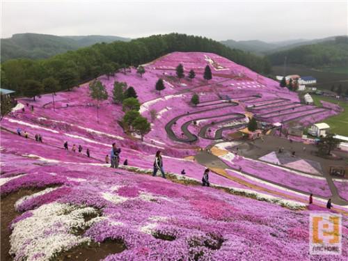 北海道網走郡東藻琴の芝桜公園♪キレイです♪癒されます♪