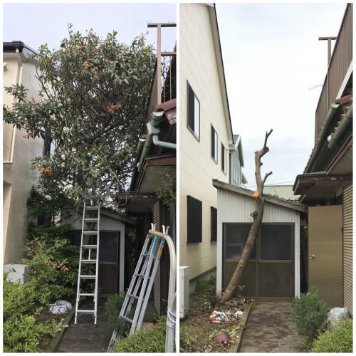 神奈川県 草木伐採 草刈 掃除