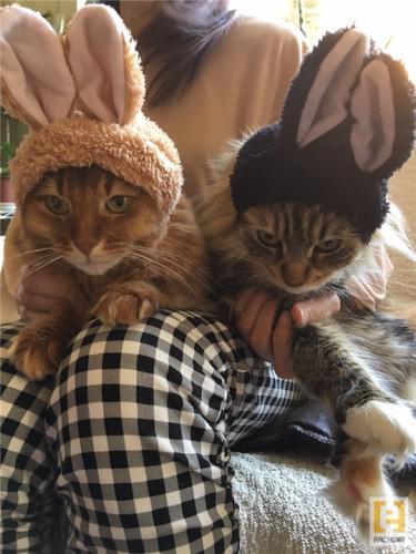 猫ちゃんと一緒に暮らすちょっとカッコイイ注文住宅☆