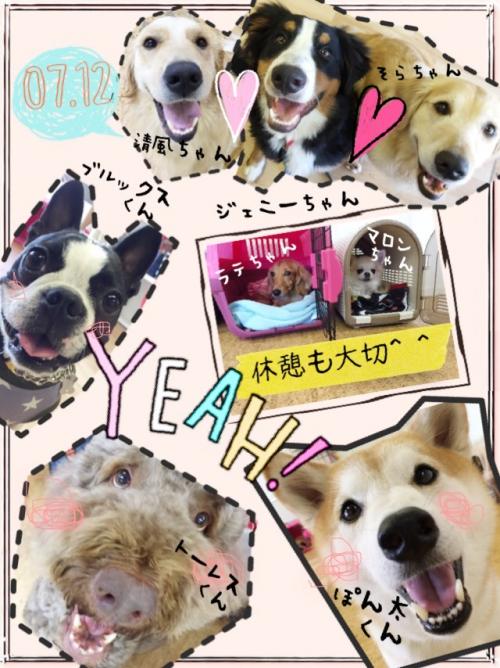 中国の犬事情