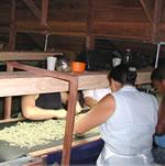 南米のコーヒー
