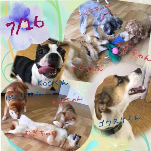 愛犬と富士山1周半の旅