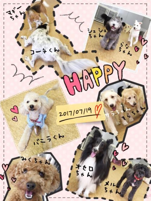 日本の犬事情、ヒアリ対策