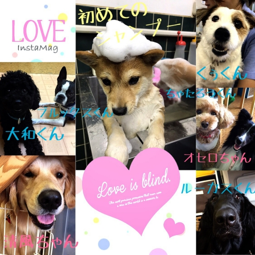 愛犬の好きな匂い、知っていますか?