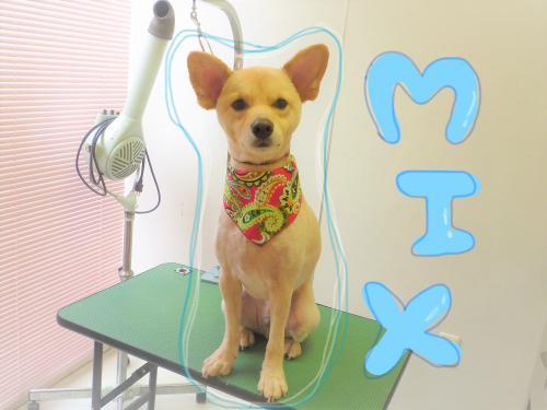 MIXのトリミング(*'▽')