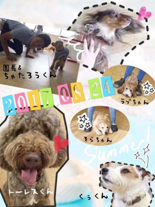 ドミニカ共和国の犬事情