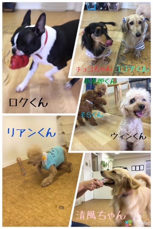 愛犬への会話が○○につながる?!