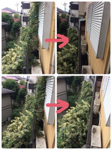 横浜市 お庭お手入れ 草刈り 不用品回収サポート