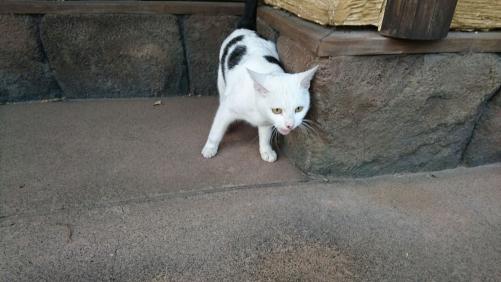 白黒猫(よその子)