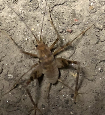 この虫なんでしょう??