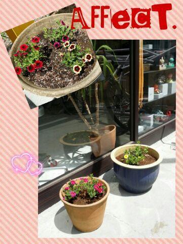 お花を飾りました(*^▽^*)