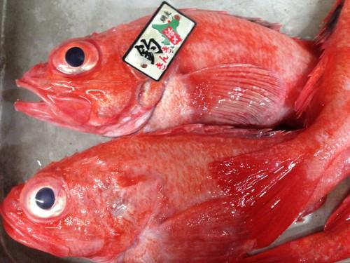 厳選素材高級魚きんき 北海道は網走より