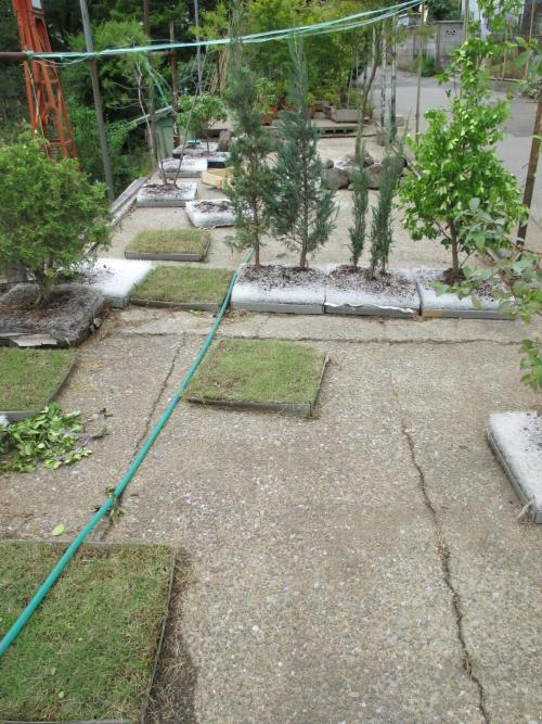 安行四季彩マット植栽施工中!2つの屋上庭園!
