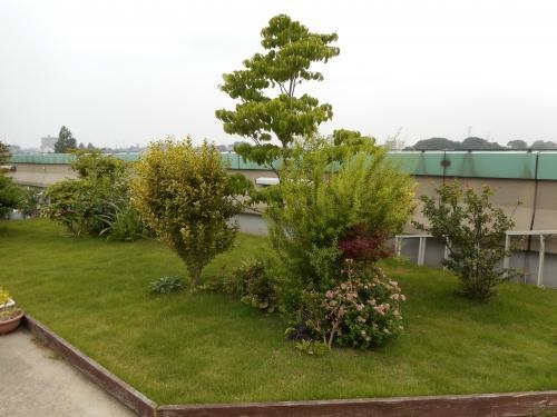 安行四季彩マットの屋上緑化、管理中!