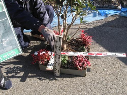安行四季彩マットの材料検査な風景!屋上緑化!