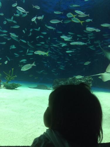 子供たちを水族館へ