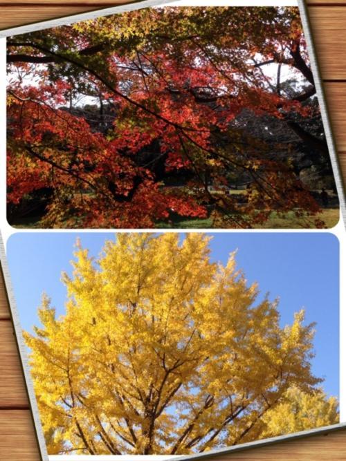 小平霊園も紅葉