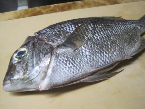 初秋の味 いちみ鯛