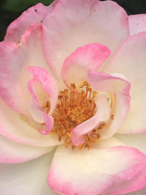季節を楽しむお花をお絵描きしたネイル