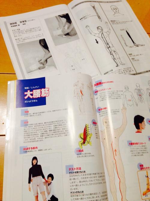キネシオロジー  筋肉反射テスト