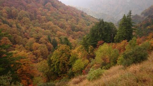 彩り季節風 白山スーパー林道撮影会報告