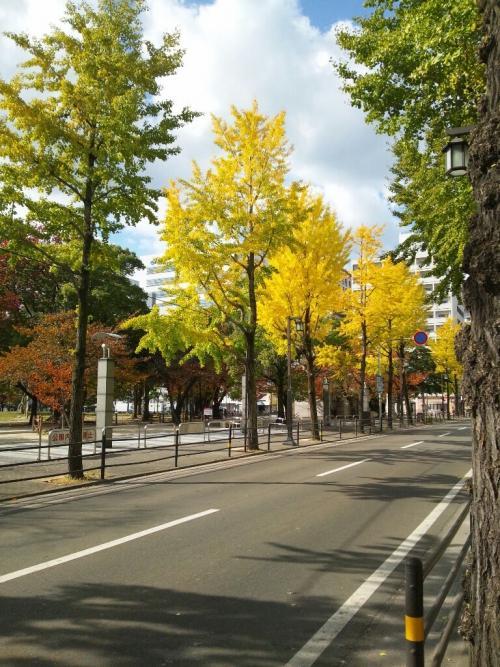 今日は福岡国際マラソン!
