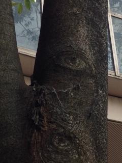 木に目があったんです。