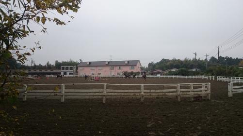 優駿学園練習馬場