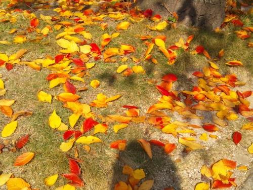 博多のオアシス・冷泉公園