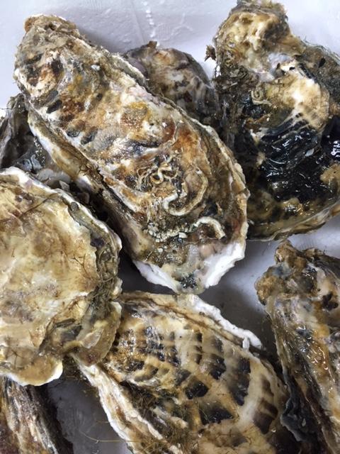 厚岸真牡蠣