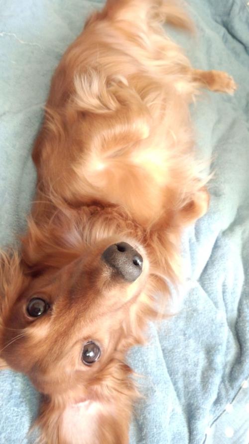 愛犬ティム
