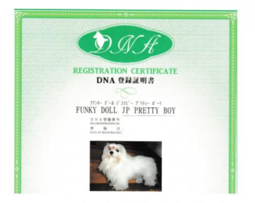 DNA登録証明書