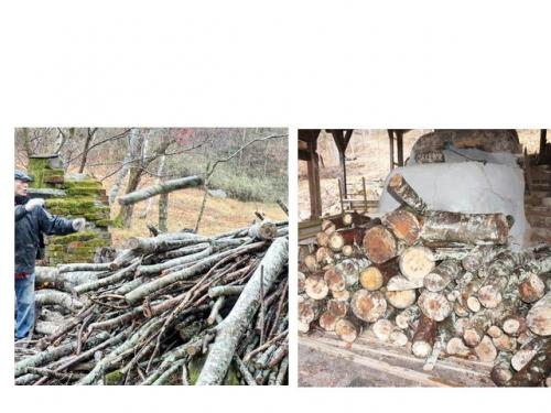 登り窯の前に積み上げた松とケヤキの丸太。ふとい