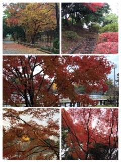 サラッと紅葉見物