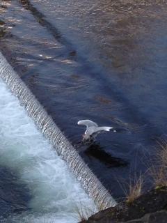 球磨川の豊かな自然に癒されました。