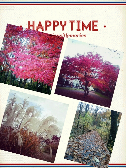 八王子浅川、小宮公園へ紅葉ウォーキング開催しました!