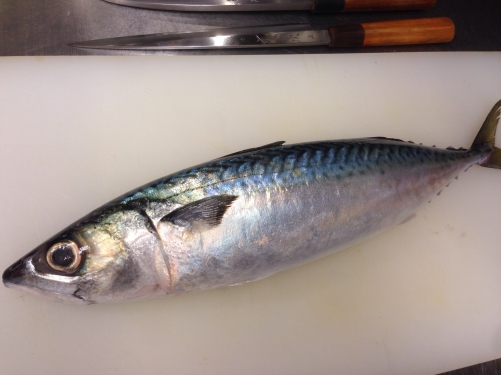 石川県産の真鯖
