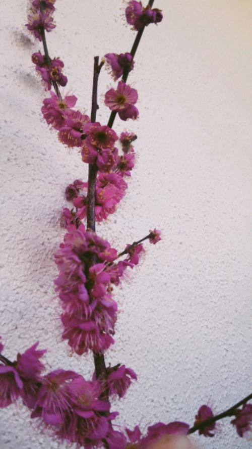 リンパマッサージで花粉症対策
