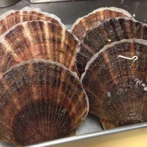 北海道産の殻付き帆立