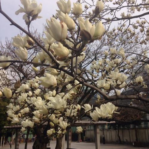 春の足音が近づいて来ました