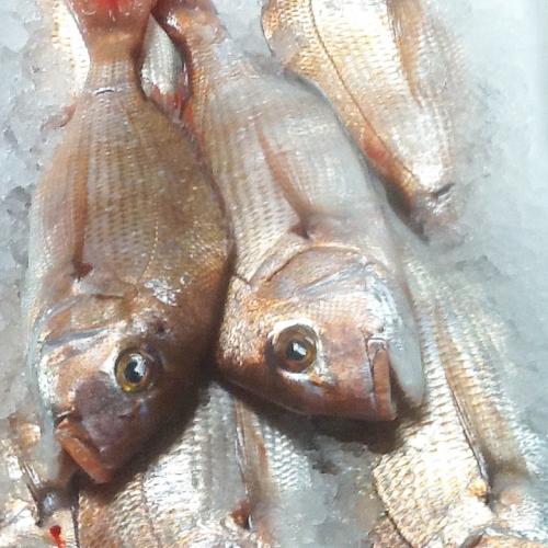 良い魚は忠兵衛ヘ(゚д゚)ノ