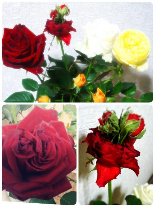 カキラのお客様より、シュールな薔薇